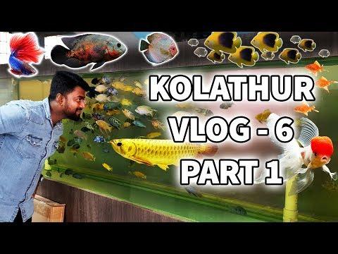 வண்ண மீன்கள் தமிழ் | Kolathur Ornamental Fish And Pet Market Vlog 6 | Part 1