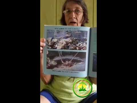 International Literacy Day: Dorothy Beveridge shares her book entitled Beautiful Belize Reef.