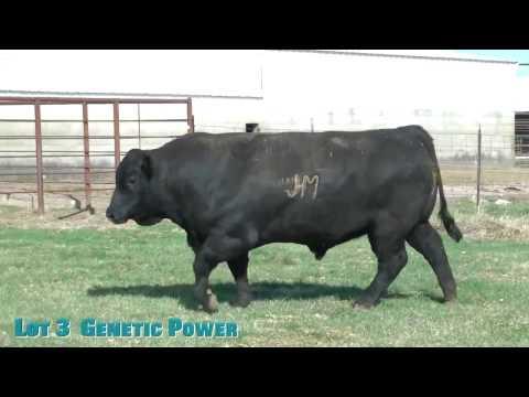 Lot 3  Genetic Power