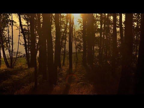 Stendahl & Shingo Nakamura - Tribute, Сhapter II (Terry Da Libra Remix) [Silk Music]