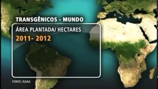 Brasil investe mais em plantio de transgênicos