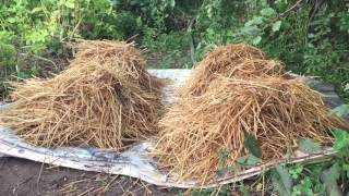 Выращивание шампиньонов на даче — как правильно посадить грибы в открытый грунт?