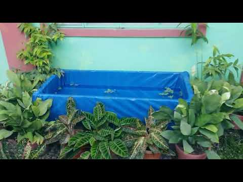 DIY Wooden Koi Pond