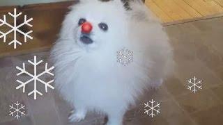 【胸キュン】モフモフ犬がお届けする「赤鼻のトナカイ」
