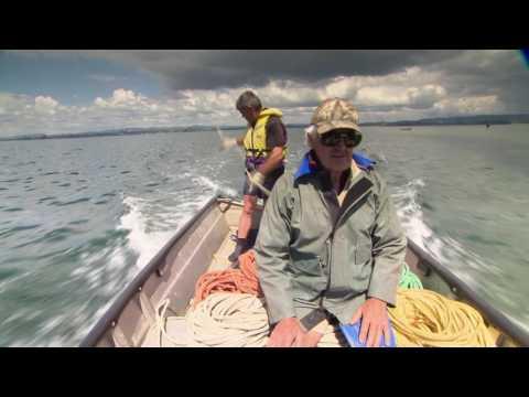 Inshore Commercial Fishing in Tauranga Harbour