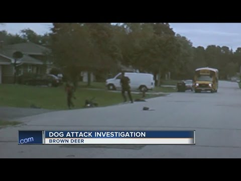 Police release dash cam video in Brown Deer dog attack