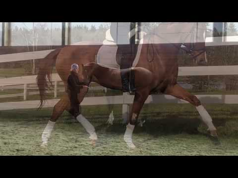 Sales Horses — van Eyck Dressage