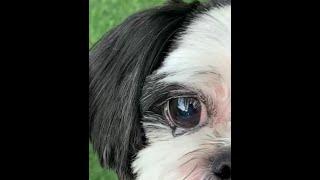맛 있어서 눈물 흘리는 강아지(?)