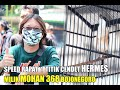 Speed Rapat Main  Titik Cendet Hermes Milik Mohan  Bojonegoro  Mp3 - Mp4 Download