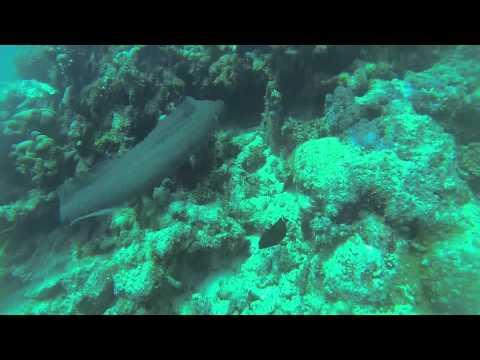 [GoPro Freediving Maldives 2015] Around Gulhi Island