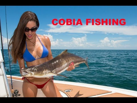 Catching COBIA in Florida