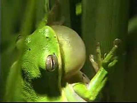 HOPE - Tree Frog (DiKi Records)