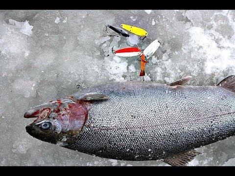 Как ловить форель зимой? Платные и дикие пруды, мормышка!