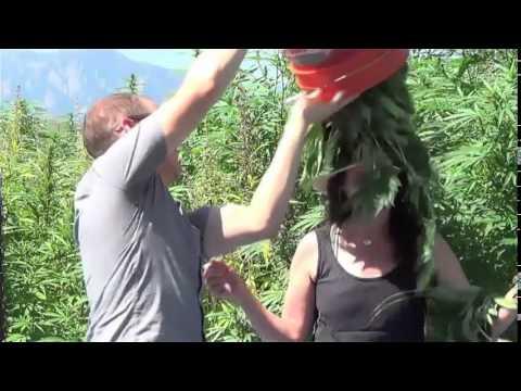 ALS Ice Bucket Challenge - Twists and Spinoffs Edition