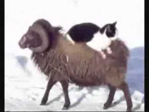 Thumbnail for Cat Video Taxi ram for cats