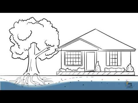 FMG Engineering - Impact of Trees on Buildings
