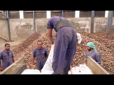 Copra Millers of Fiji Ltd - Skyward Video