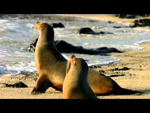 Sea lions  pictures and sounds