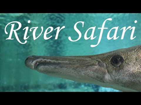 River Safari Singapore Complete Walkthrough 2017