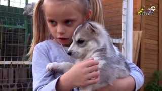 Дети о зверях