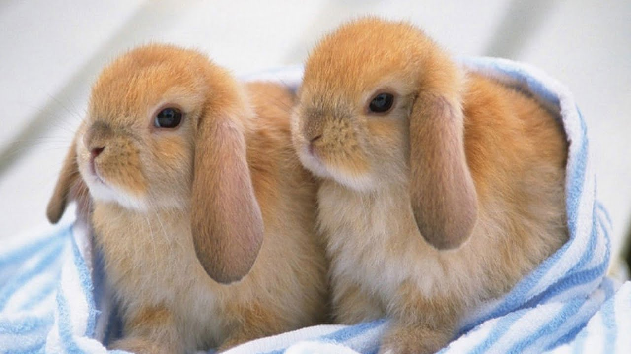 Ultimate A Funny And Cute Bunny Rabbit Videos Compilation