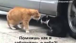 Семейная разборка кота и кошки Прикол.flv