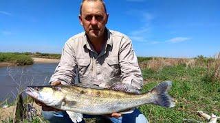 НЕ МОГУ ПОДНЯТЬ ЭТУ РЫБУ СО ДНА Ловля судака и налима Рыбалка на реке с НОЧЕВКОЙ