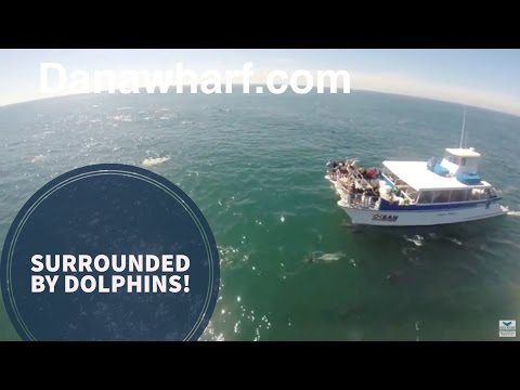 Common Dolphins surround Whale Watching Catamaran