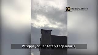 Testimoni Suara Walet Original BAN Jaguar