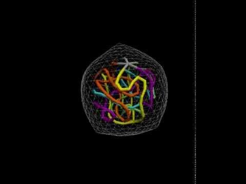 cell nucleus simulation