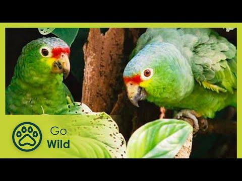 Almendro Tree of Life - The Secrets of Nature