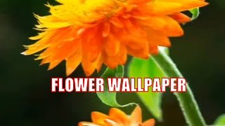 Hd Wallpaper 2016   Download Hd Wallpapers For Your Iphone Or Android Smartphone