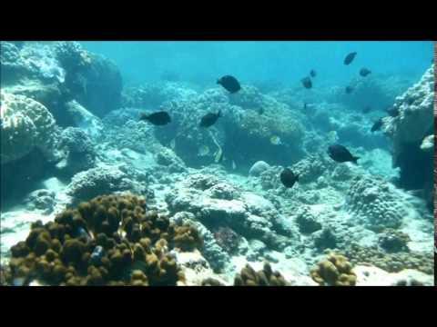 Snorkelling in Paindane reef, Inhambane, Mozambique.