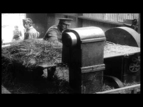 British women workers load hay and cut chaff at a remount depot to aid war effort...HD Stock Footage