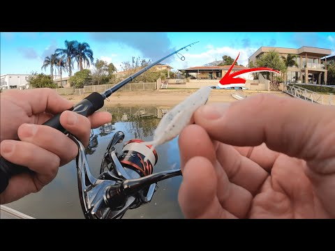 BREAM FISHING | Gold Coast Canals.