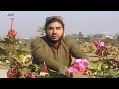 Gul Ba Raworam - Hafiz Sohail Ahmad Saadi