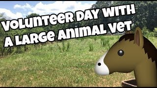 A Day Volunteering with an Equine Vet