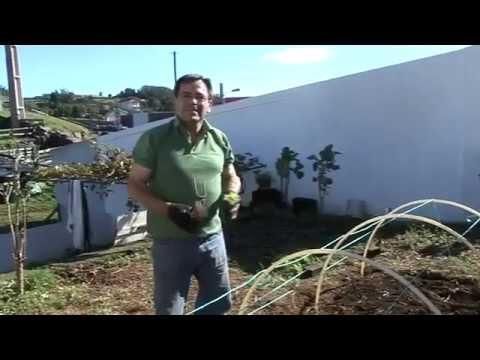Como construir uma mini - Estufa  by Manuel Bettencourt -TV