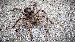 Ядовитые пауки в Тюменской области ?