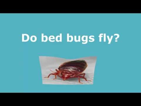 Can Bed Bugs Jump Or Fly Bedbug Movement Pestpolicy