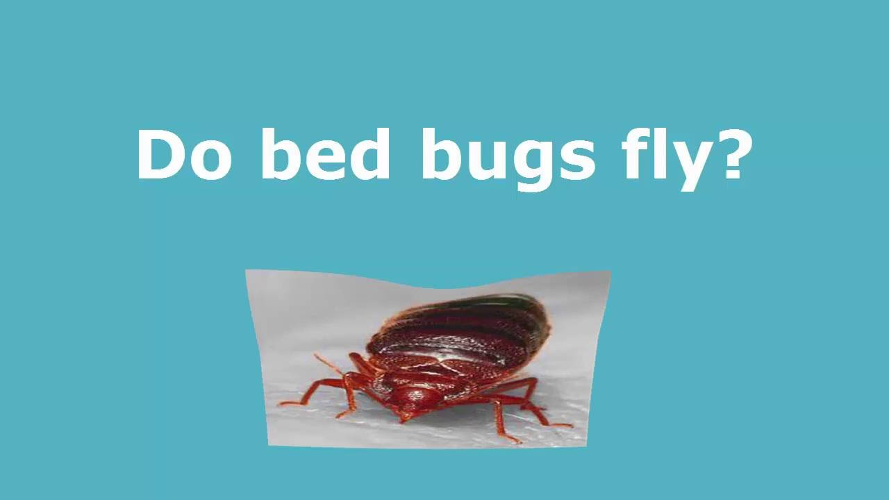 tx treatment frontier control bites bugs where bug guaranteed do katy houston hide bed satisfaction