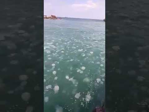 Нашествие медуз на