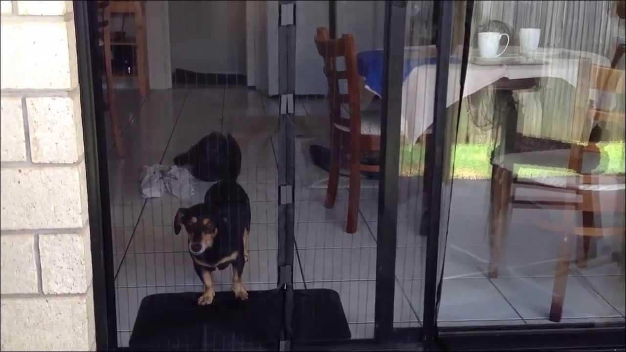 7 best dog proof screen doors 2021
