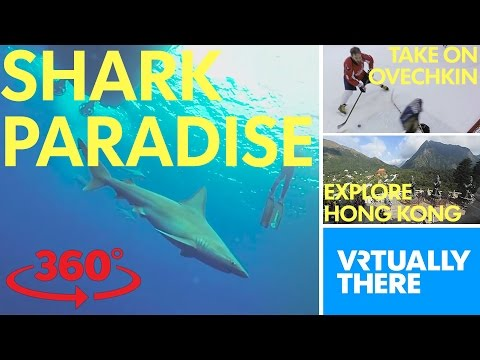 360-video: Swim with sharks, be an NHL...