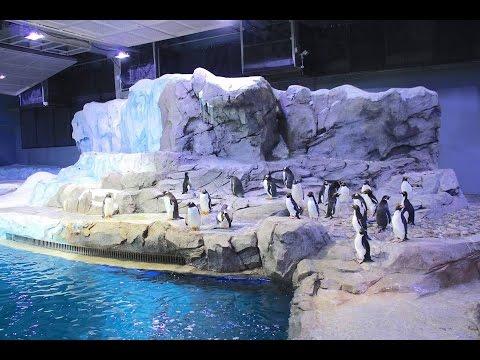 Detroit Zoo | Vlog