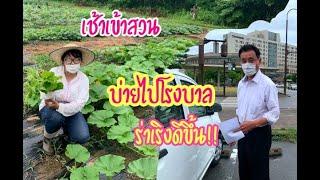 เช้าเข้าสวนเก็บผัก บ่ายไปตามหมอนัด สามีอาการดีขึ้นร่าเริงใหญ่เลย ชีวิตในญี่ปุ่น [2020Ep110]