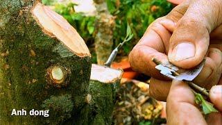 Chia sẽ tạo dáng và ghép cây mai bonsai