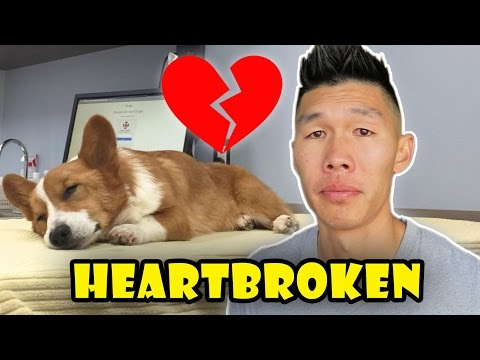 HEARTBROKEN OVER CORGI NEWS - Life After College: Ep. 509