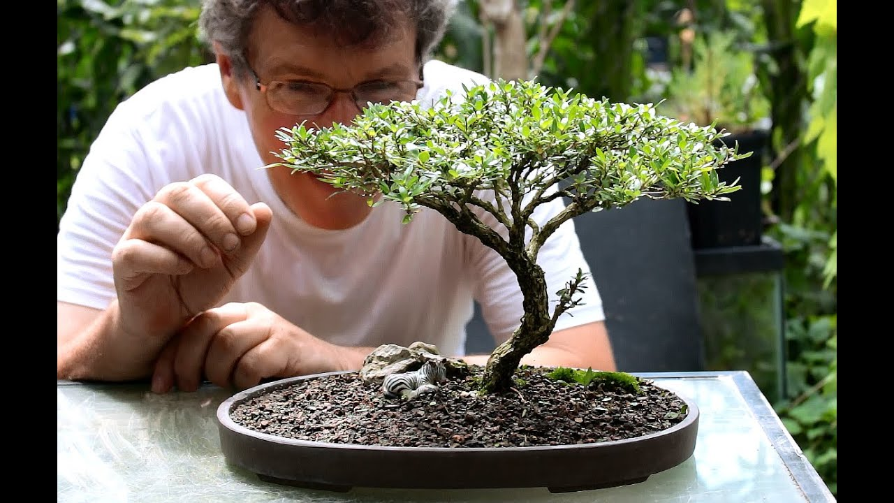 Best Bonsai Books Bonsai Tree Gardener