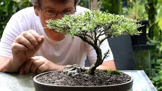 Five tips for starting into bonsai.
